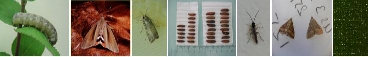 ADALEP : Adaptation à l'environnement chez les Lépidoptères