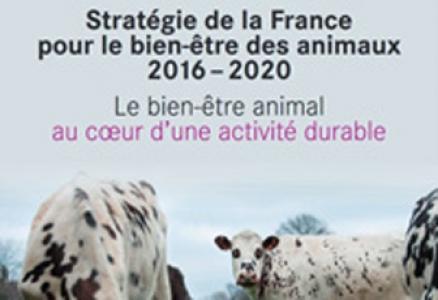 Plan d'action en faveur du bien-être animal pour.....
