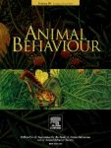 Observer bias in animal behaviour research: can we believe what we score...