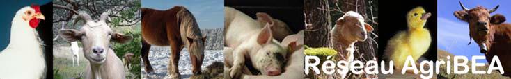 Bienvenue sur le site AGRI BEA de l' INRA