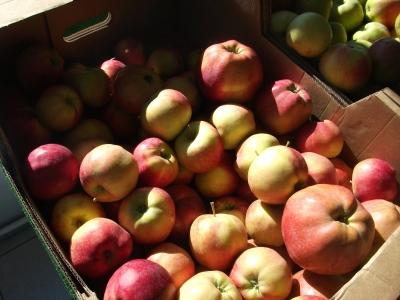 AgriLink2020_Latvian_apples