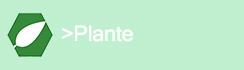 Pilier Plante