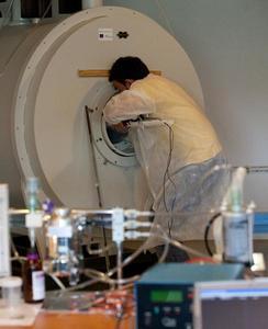 Introduction d'un rat anesthésié dans un IRM