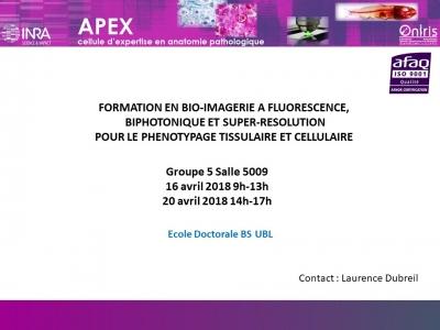 Formation en bio-imagerie à fluorescence