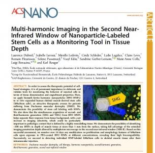 Des nanoparticules pour le tracking cellulaire en microscopie multiphotonique