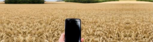 smartphone sur champ de blé, Nadège Petit AgriZoom