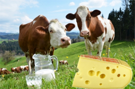 ALIMENT FONCTIONNEL : DE L'EMMENTAL AUX PROPRIETES ANTI-INFLAMMATOIRES
