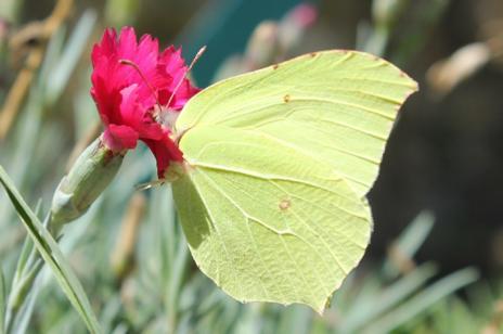 Dynamiques papillon