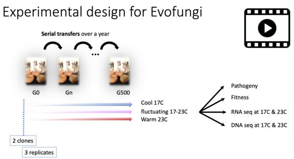 Experimental design_Evofungi