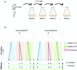 Figure publi EvoFungi - Evolution and Plasticity of the Transcriptome Under Temperature Fluctuations in the Fungal Plant Pathogen Zymoseptoria tritici