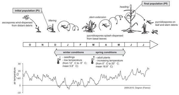 Figure publi SEPTOVAR - Seasonal Changes Drive Short-Term Selection for Fitness Traits in the Wheat Pathogen Zymoseptoria tritici