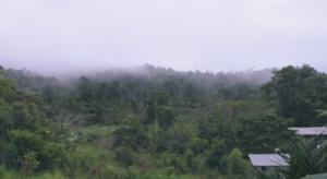Forêt extrait documentaire SENAC