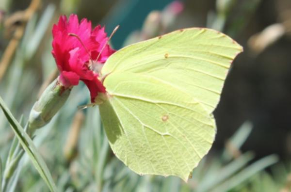 Papillon projet Dynamiques (Marine Levé)
