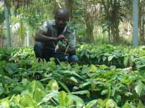 Production de jeunes plants à la pépinière de Kpalimé, Togo 2017, ©Kinomé