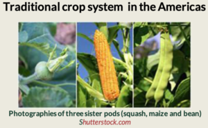 Traditional crop system in the Americas Coculture