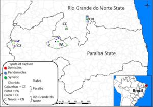 Article Brésil projet phare 2