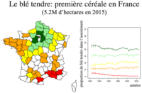 Projet Phare 2_extrait article blé tendre