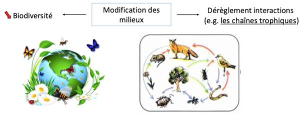 Modification des services écosystémiques_Ravageurs