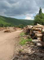 PACA bois énergie arbres coupés
