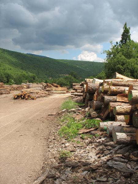 photo de troncs ds paysage Roxane S. PACA bois énergie