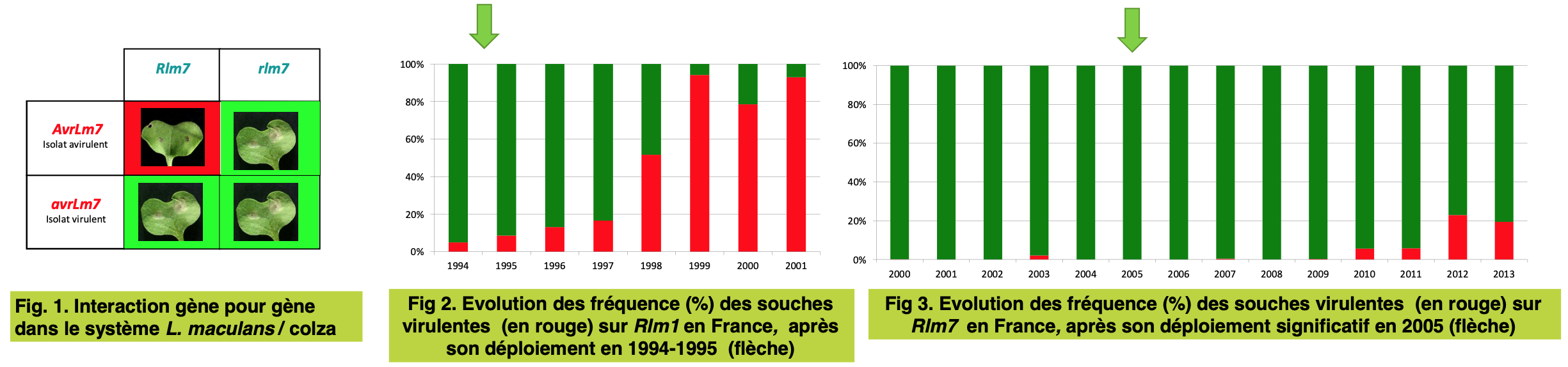 Poster fiche initial DynamiC-Rlm7