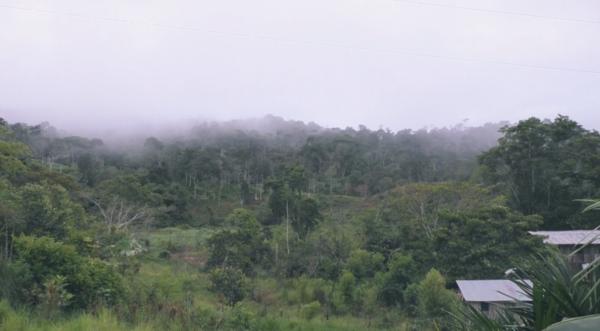 Forêt dans le documentaire du projet SENAC
