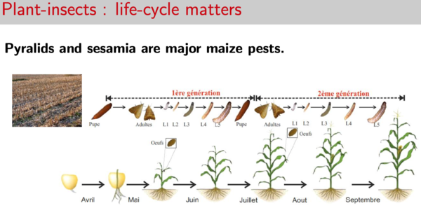 Plant-insects: Life-cycle matters_Itemaize