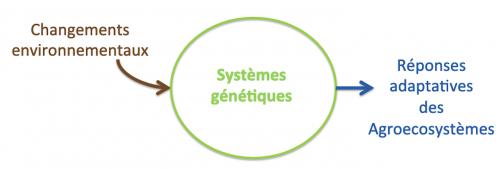 2- Capacités adaptatives des agroécosystèmes