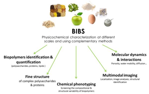 BIBS presentation
