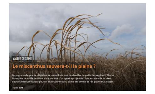 Vallée de la Seine : Le miscanthus sauvera-t'il la plaine ?