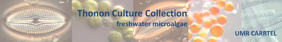 Thonon Culture Collection - freshwater microalgae