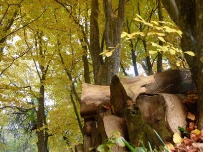 Bois et forêt
