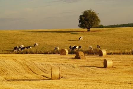Complémentarités entre cultures et élevages