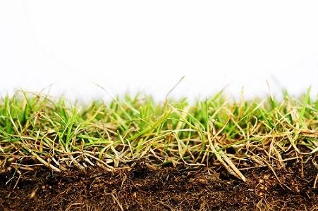 Fertilité biologique des sols