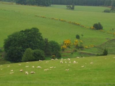 Impact env ruminants