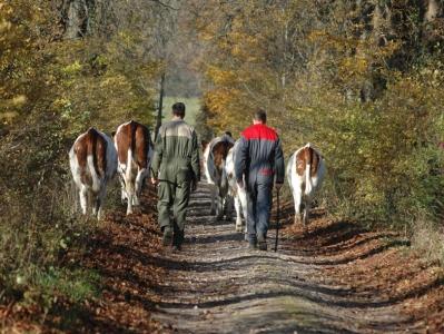Polyculture-élevage à l'INRA de Mirecourt (88)