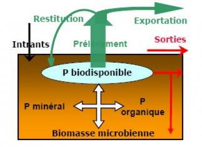 Cycle du phosphore dans les sols (Fertiagribio)