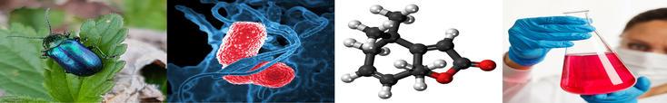 Photos d'un coléoptère, d'une bactérie, d'une molécule de phéromone et d'un erlenmeyer rempli