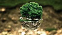 Photo d'un arbre avec les racines dans une coupole de verre