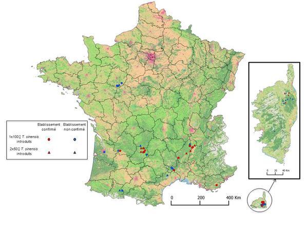 Carte de l'établissement de T. sinensis en France en 2013