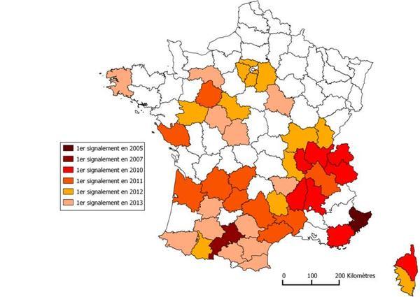 Extension des foyers de cynips du châtaignier en France