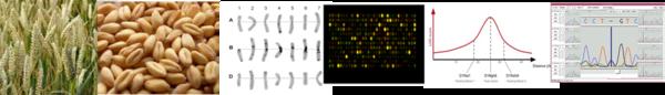 Genetics & Genomics on wheat