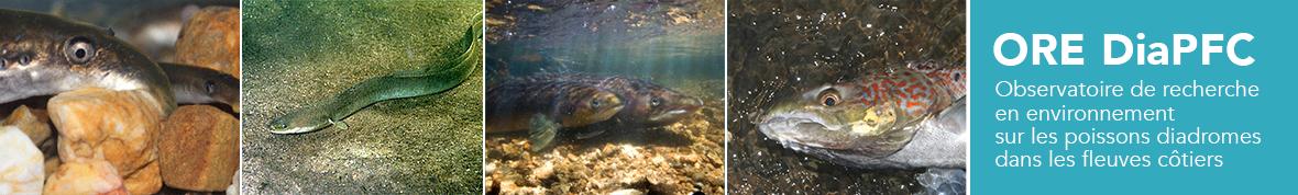 Observatoire de recherche en environnement sur les poissons diadromes dans les fleuves côtiers