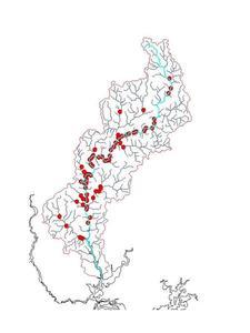 Indices d'abondance saumon sur le Scorff