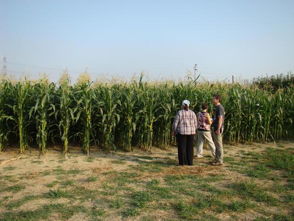 D1-ITA-Bologna Field Experiments