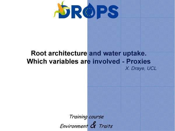 Root architecture