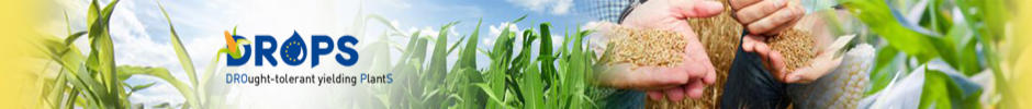 Bandeau DROPS Drought-tolerant Tielding plants