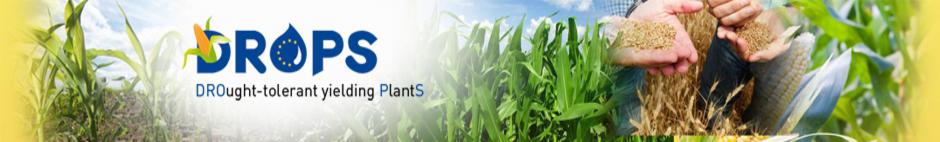 Bandeau DROPS Drought-tolerant Yielding plants