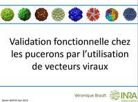 Validation fonctionnelle chez les pucerons par l'utilisation de vecteurs viraux