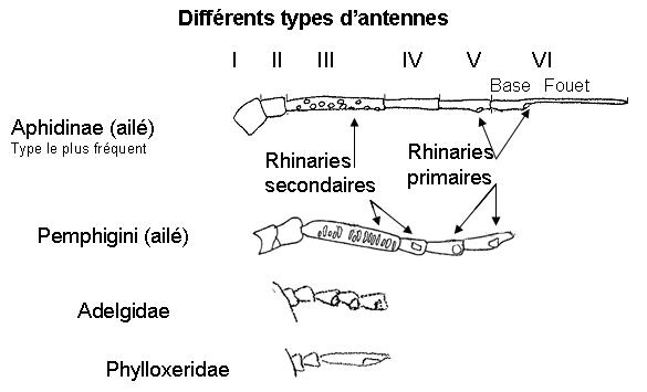 Différents types d'antennes